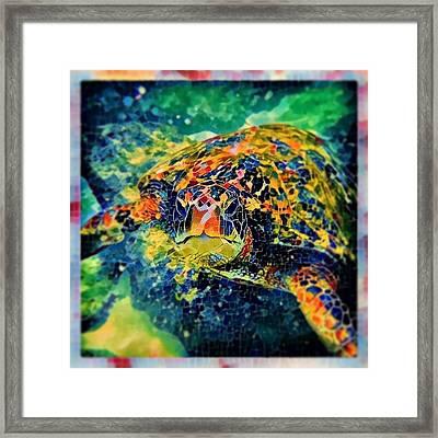 Sebastian The Turtle Framed Print