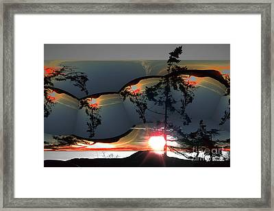 Sechelt Tree 12 Framed Print