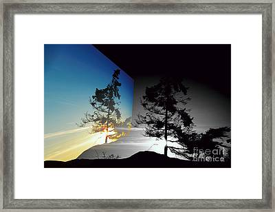 Sechelt Tree Framed Print