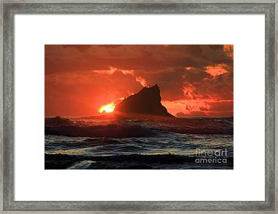 Second Beach Shark Framed Print