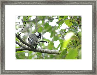 Framed Print featuring the photograph Second Glance by Angie Rea