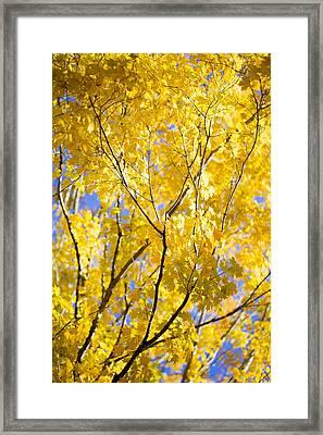 Second Spring Framed Print