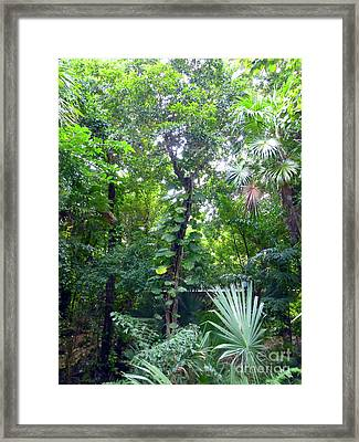 Framed Print featuring the photograph Secret Bridge In The Tropical Garden by Francesca Mackenney