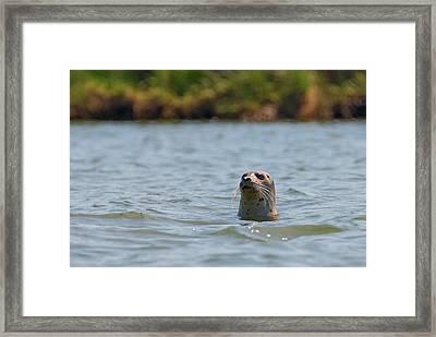 Secret Fishing Spot Framed Print by Loree Johnson