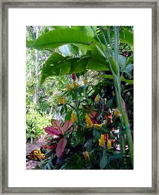Secret Garden Cat Framed Print by David  Van Hulst