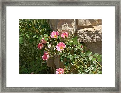 Secret Garden Framed Print by Lisa Patti Konkol