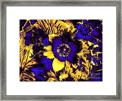 Secret Garden Framed Print by Steve K