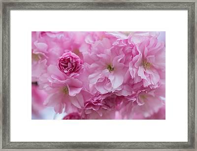 Secret Life Of Flowers Framed Print