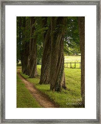 Secret Path Framed Print