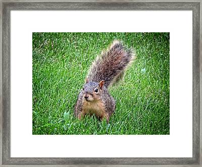 Secret Squirrel Framed Print by Kyle West