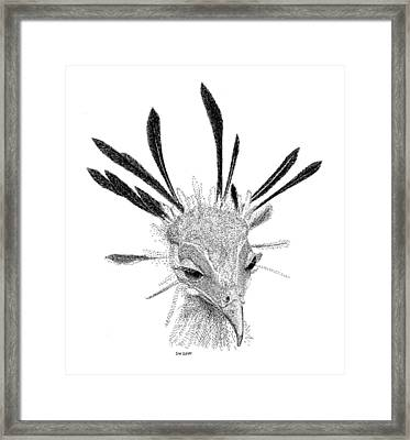 Secretary Bird Framed Print