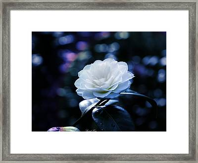 Secrets Of Nature Framed Print