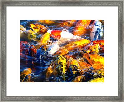 Secrets Of The Wild Koi 17 Framed Print