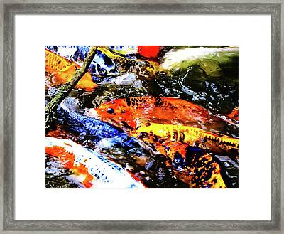 Secrets Of The Wild Koi 19 Framed Print