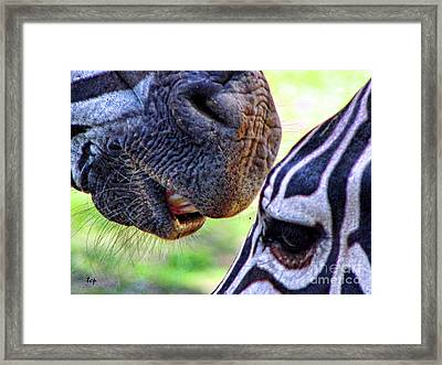 Framed Print featuring the photograph Secrets by Traci Cottingham