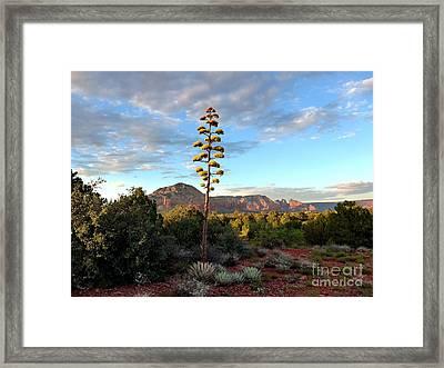 Sedona Century Plant Framed Print