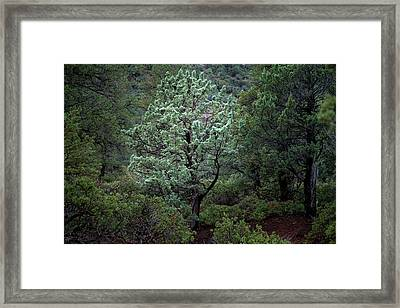 Sedona Tree #1 Framed Print