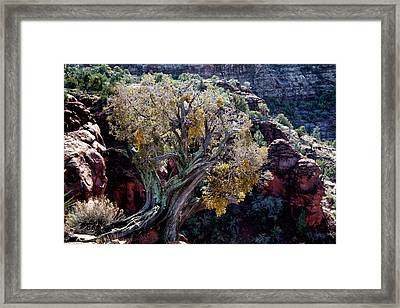 Sedona Tree #2 Framed Print