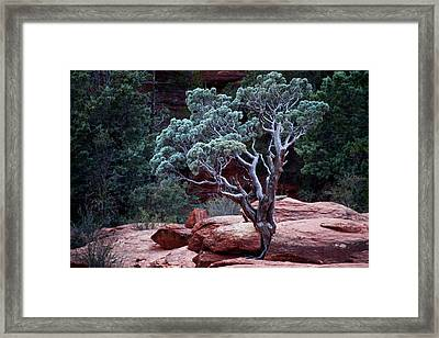 Sedona Tree #3 Framed Print
