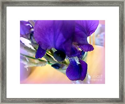 Sedona Wild Iris Framed Print