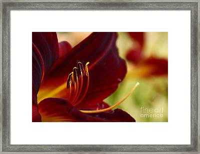 Seduction After The Rain Framed Print