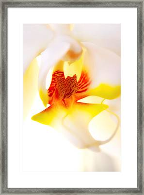 Framed Print featuring the photograph Seductive Is The Orchid by Michael Hope