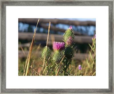 Seductive Thorn Framed Print by Debbie Hall