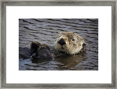 See Otter Posing Framed Print