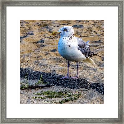 Framed Print featuring the photograph See The Gull by Kendall McKernon