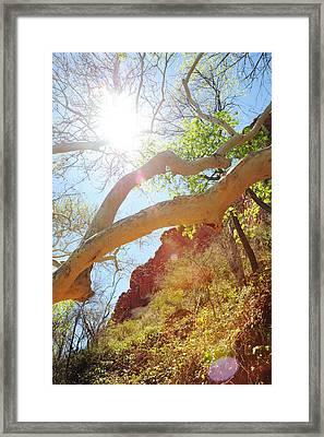 See The Light Framed Print by Kate Livingston