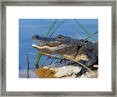 See Ya Later Framed Print by Teresa A and Preston S Cole Photography