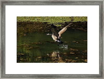 See Ya Framed Print by Scott Gould