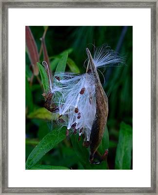 See Ya Framed Print by Terri Waselchuk
