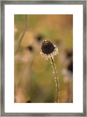 Seed Head Framed Print by Andrea Kappler