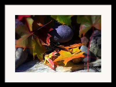 Multicolor Photographs Framed Prints