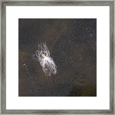 Seed On Ice - Lake Wingra - Madison - Wisconsin Framed Print by Steven Ralser