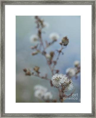 Seed Pods By The Lake Framed Print