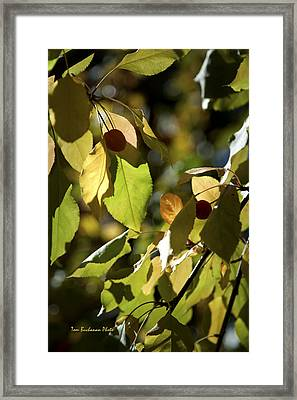 Seed Pods In The Fall Framed Print
