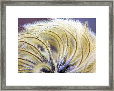Seedheads Framed Print by Brian Roscorla