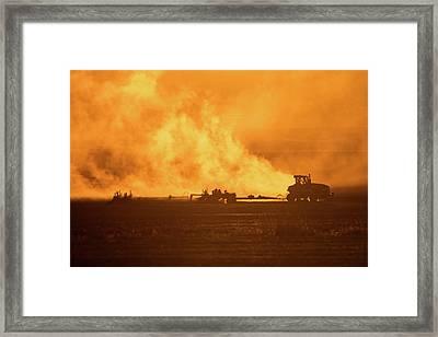 Seeding Silhouette Framed Print by Todd Klassy