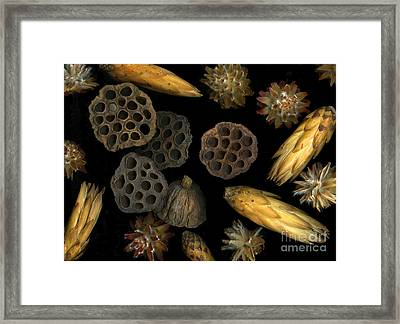Seeds And Pods Framed Print by Christian Slanec