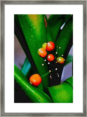 Seeds Framed Print by John Toxey