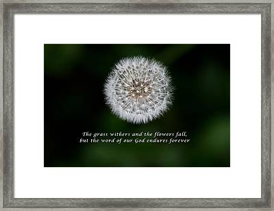 Seeds Of Truth From Isaiah 40 Framed Print by John Haldane