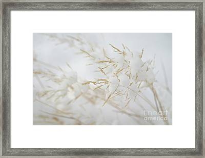 Seeds Of Winter Framed Print