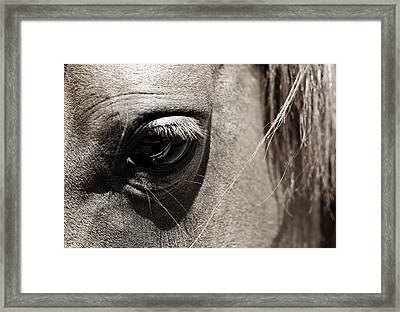 Stillness In The Eye Of A Horse Framed Print by Marilyn Hunt
