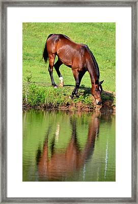 Seeing My Own Reflection Framed Print by Maria Urso