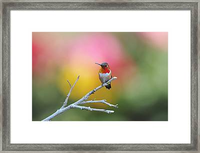Seeing Red Framed Print by Lynn Bauer