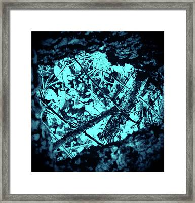 Seeing Through Trees Framed Print