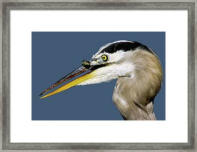 Seeing Your Captor Eye To Eye Framed Print