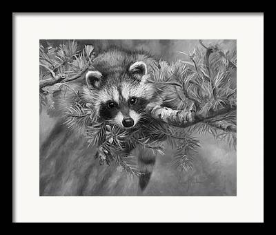 Black And White Raccoon Framed Prints